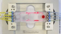 Bild: Multiorgan-Chip; Copyright: Fraunhofer IWS Dresden