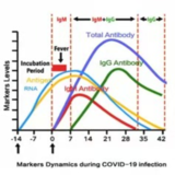 Markers Dynamics during COVID-19 infection